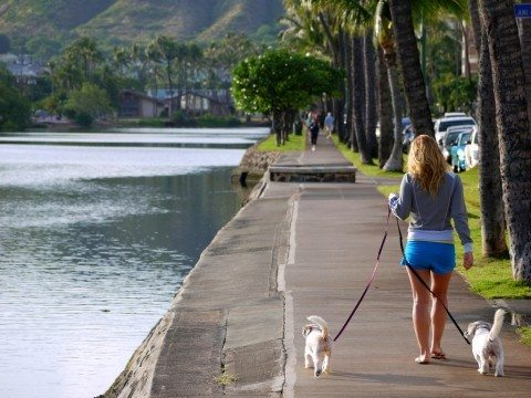 See the complete list of most dog friendly cities in the U.S. and the top dog friendly states.