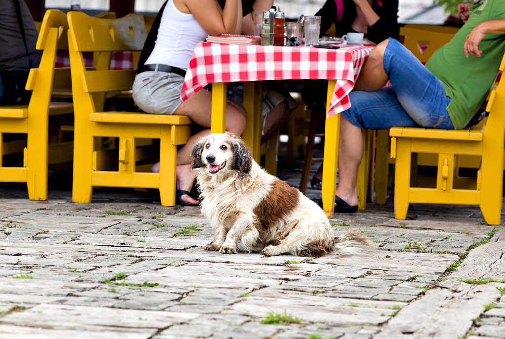 The number of dog friendly restaurants is one of the many factors that determines how pet friendly a city is.