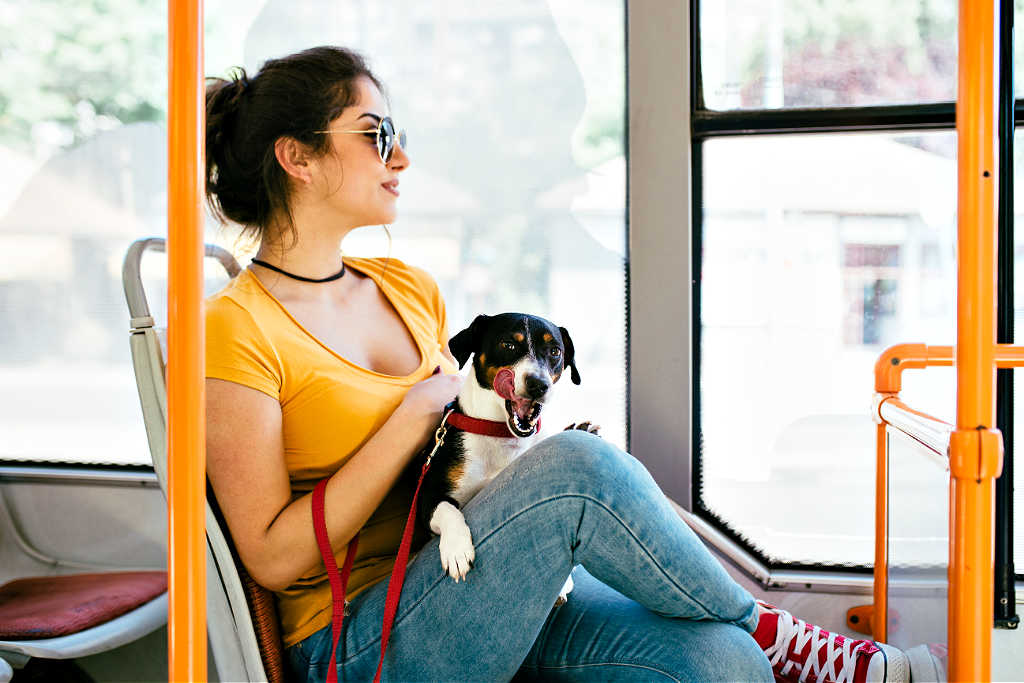 Dog friendly public transportation is one of the many factors that determines how pet friendly a city is.