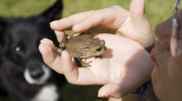 Dog Frog Poisoning Facts: It's True, A Toad Really Can Kill A Dog!