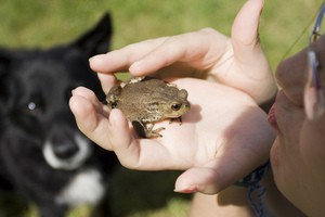 dog-frog-poisoning-by-Scarto.jpg