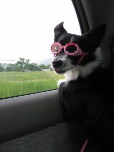 dog-goggles-car-ride