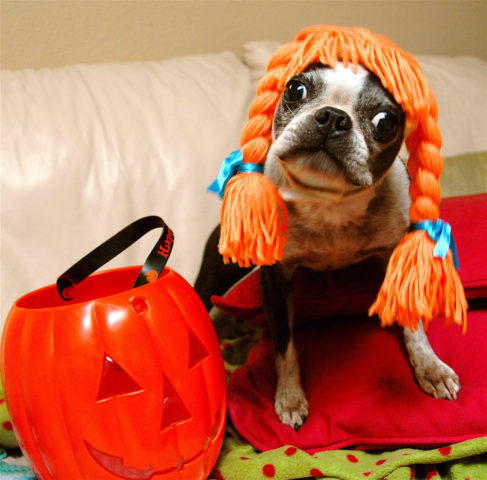 Sometimes a simple wig is all it takes to create an easy dog Halloween costume!