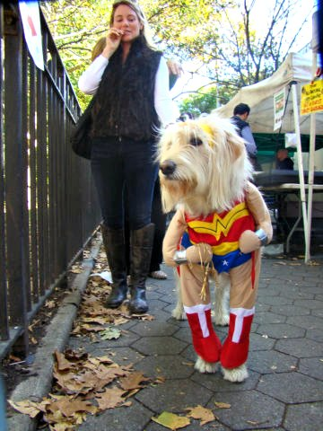 Dog Halloween costumes can pose a number of safety issues -- for both you and your dog -- when participating in pet costume contests and parades.