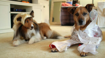 6 Funny Dog Halloween Costumes You Can Make With Little Or No Sewing