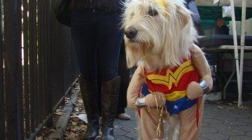 Do This NOW To Keep Your Dog Safe (And Happy!) In A Dog Halloween Costume