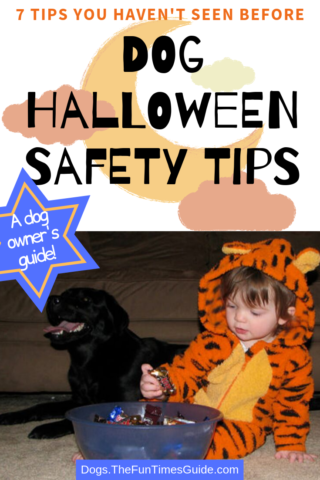Dog Halloween Safety TIps - 7 ways to include your dog in Halloween without all the stress!