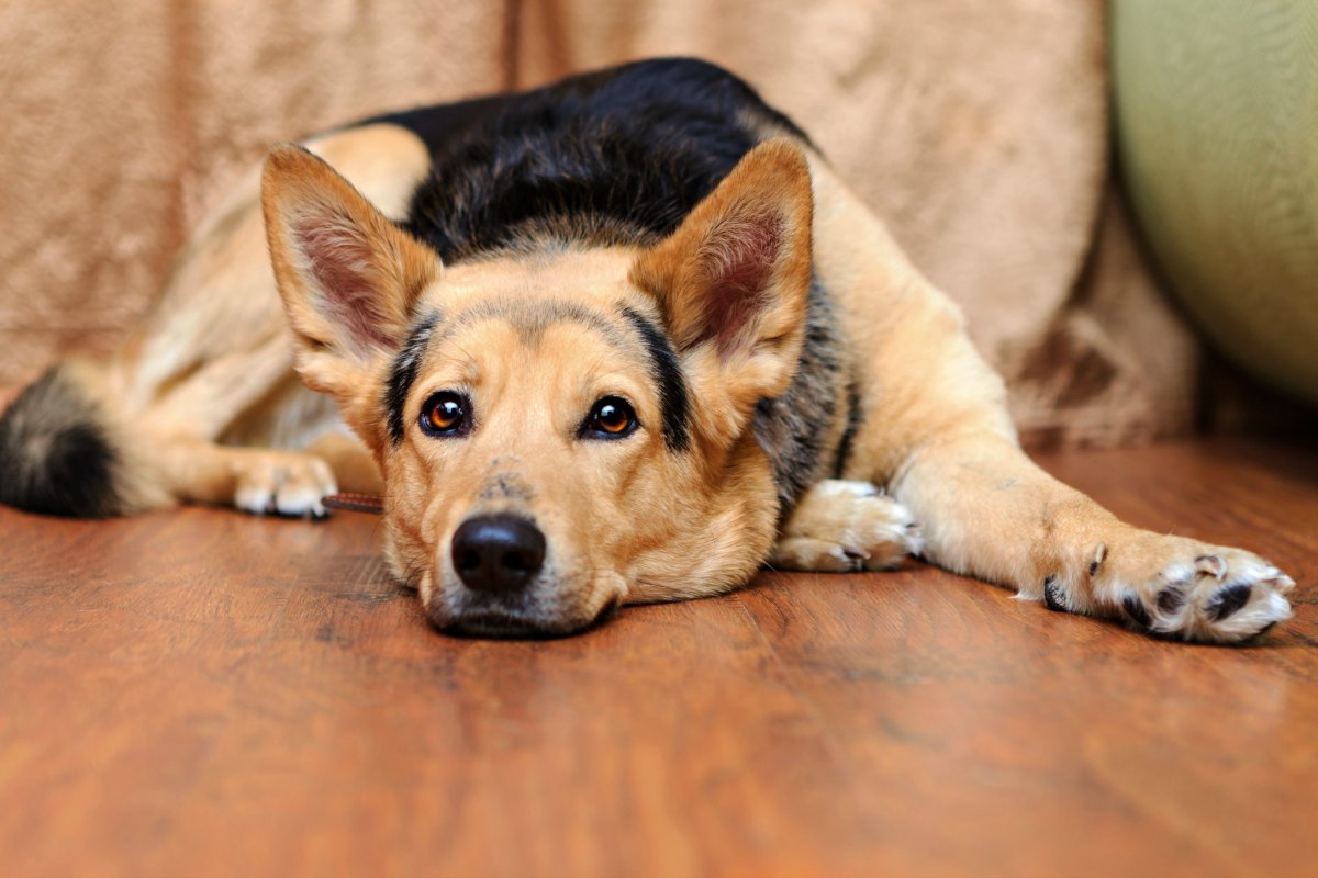 Furry dog paws and hardwood flooring don't mix well - you should keep the paw fur trimmed.