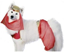 dog-harem-costume.jpg