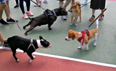 Dog training equipment - A dog harness is better than a dog collar