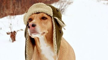 VIDEOS: Dogs With Hats!