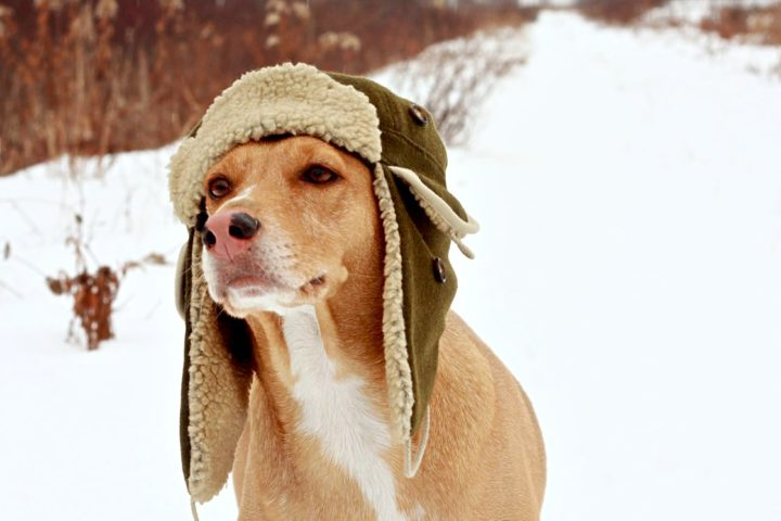 Videos Dogs With Hats The Fun Times Guide To Dogs