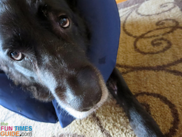 My dog had a hot spot, so we used this inflatable soft dog cone collar and it worked great!