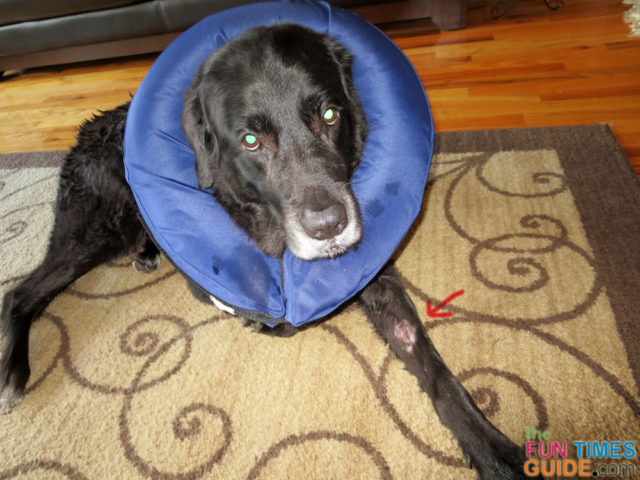 Best Hot Spot Remedy For Dogs