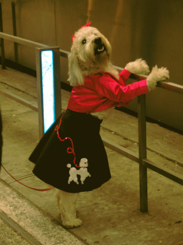 For dog owners halloween just wouldn t be halloween unless the dog