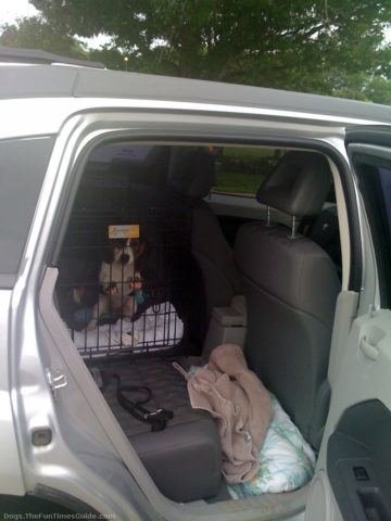 Car Lot Near Me >> Dog Afraid Of Car Rides? Here's How To Get Your Dog ...