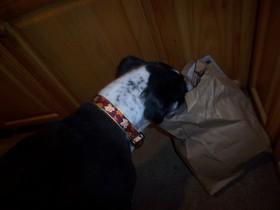 dog-in-garbage-bag-by-sandstep.jpg