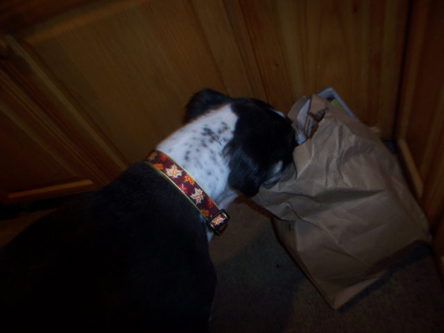Can Dogs Eat Ham Bones Safely