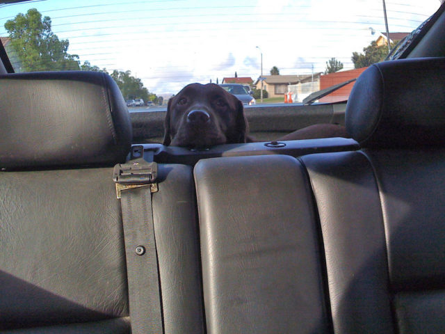 best cars for dog owners what to look for in a dog friendly vehicle the dog guide. Black Bedroom Furniture Sets. Home Design Ideas