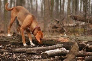 dog-in-woods-by-TheGiantVermin.jpg