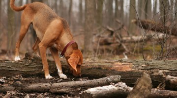 Did You Know You Can Get Lyme Disease From Your Dog?