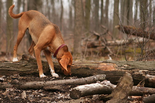A dog in the woods - hopefully he won't come in contact with any ticks or get Lyme Disease.
