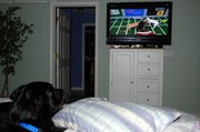 dog-intrigued-by-football-plays-on-tv.jpg