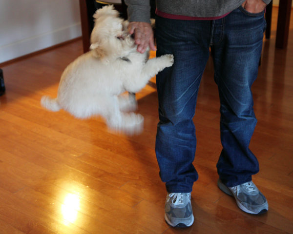 how to keep a dog from jumping up