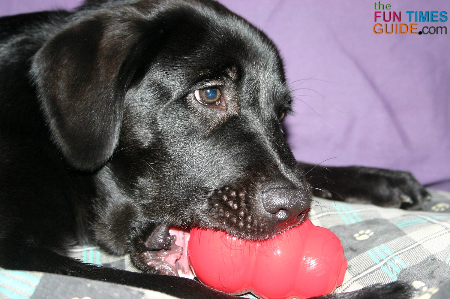 My dogs have always been huge fans of classic Kong toys filled with tasty treats inside.
