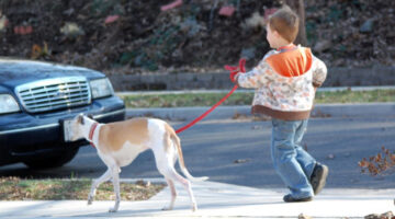 How To Train Your Dog To Walk On A Leash… Without Pulling!