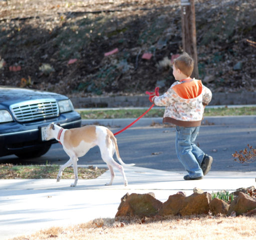 Teaching Your Dog To Walk On A Leash Without Pulling