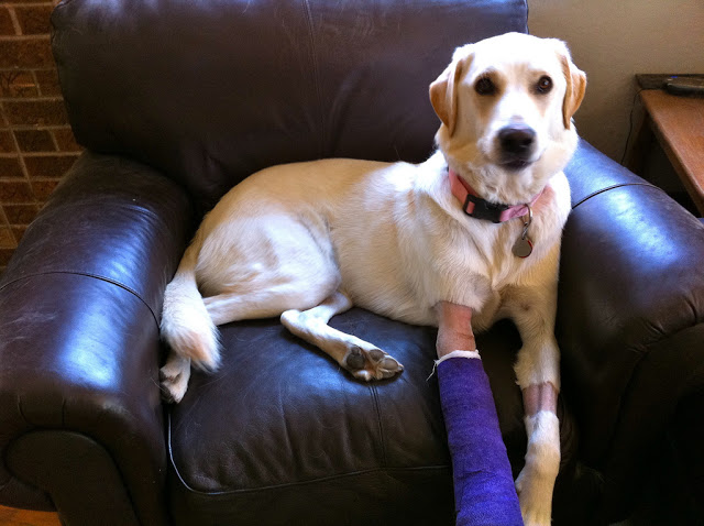 How To Keep Dog Bandages And Casts Dry In Wet Rainy Or
