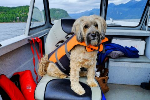 Find out here if life jackets for dogs are required or not.