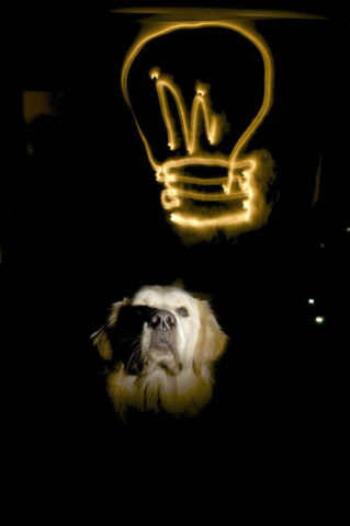 dog-light-bulb-by-TimSimpson.jpg