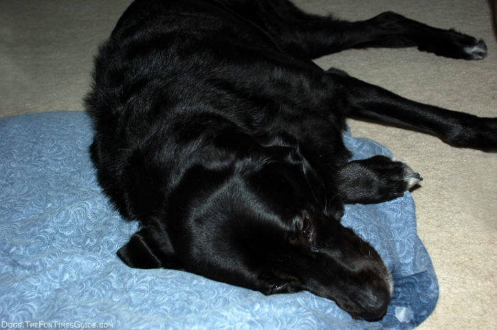 Tplo Recovery What You And Your Dog Can Expect Fun
