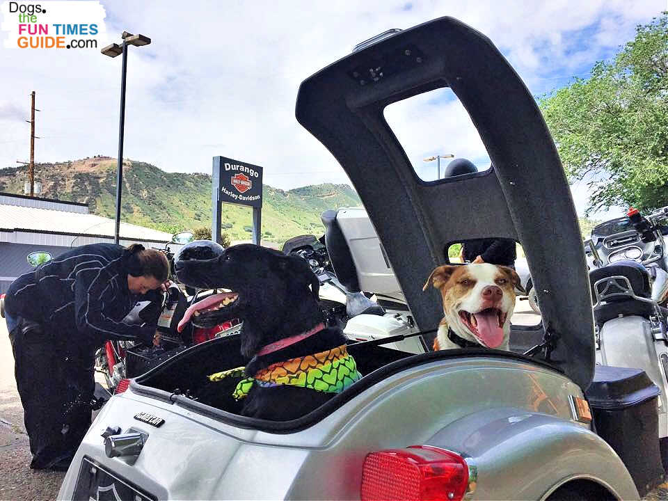 Two dogs in a pull-behind motorcycle trailer.