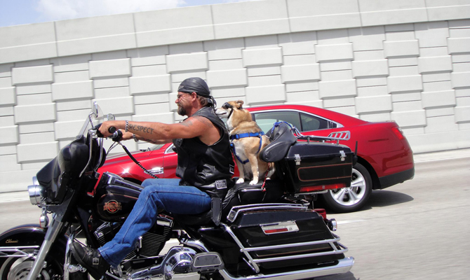 Dog riding on the back of a motorcycle.
