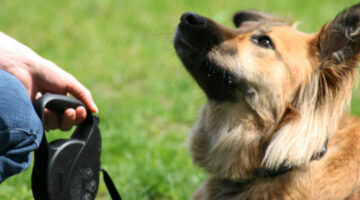 Having Dog Training Problems? Try A Different Dog Obedience Training Method