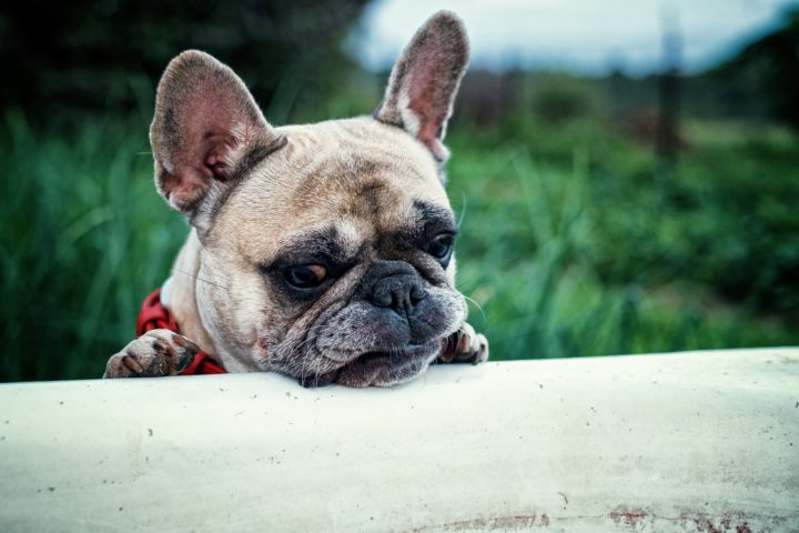 While most dogs LIKE putrid smells, dog owners do not! Pick a DIY dog