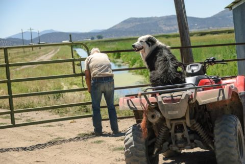 Some dogs love four-wheelers