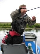 dog wearing life jacket on fishing boat