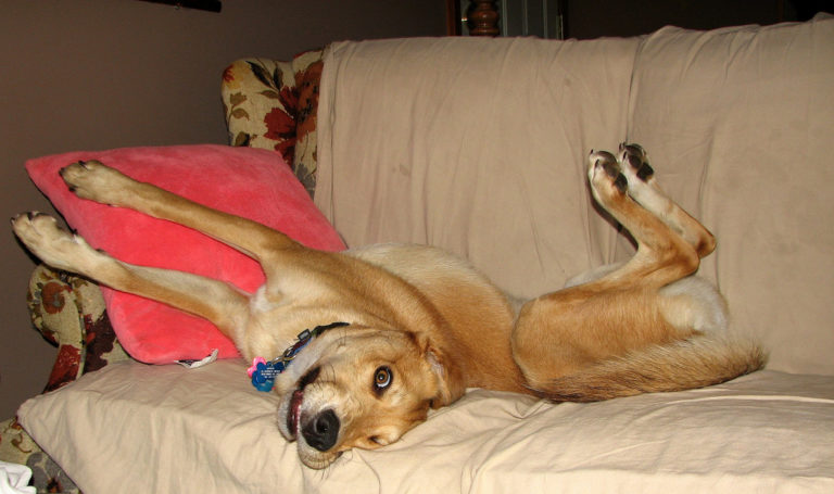 How To Keep Your Dog Off Furniture In The House The Dog Guide