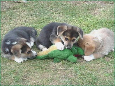 dog-pack-attacks-gator.jpeg