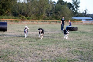 dog-park-by-chase-n.jpg
