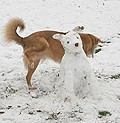 dog-peeing-on-snow-dog-sculpture.jpg