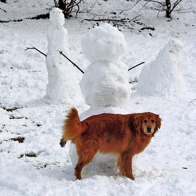 dog-peeing-on-snowman.jpg