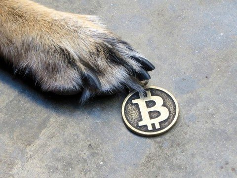 dog-penny-coin
