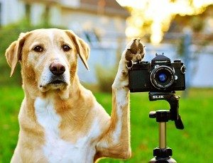 dog-photos