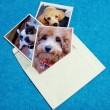 dog-pictures