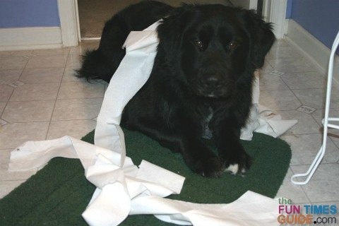 dog-playing-with-toilet-paper
